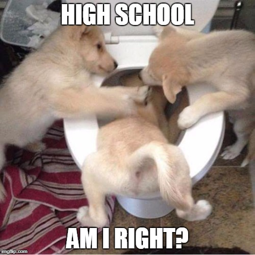 Recalling High School | HIGH SCHOOL AM I RIGHT? | image tagged in toilet puppies,meme,memes,dogs,puppies | made w/ Imgflip meme maker