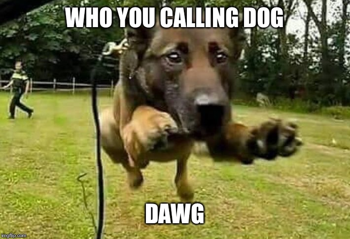 WHO YOU CALLING DOG DAWG | made w/ Imgflip meme maker