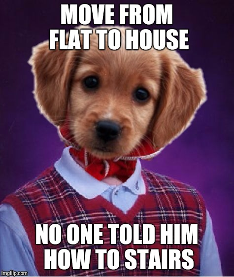 Bad Luck Bingley | MOVE FROM FLAT TO HOUSE NO ONE TOLD HIM HOW TO STAIRS | image tagged in bad luck bingley | made w/ Imgflip meme maker