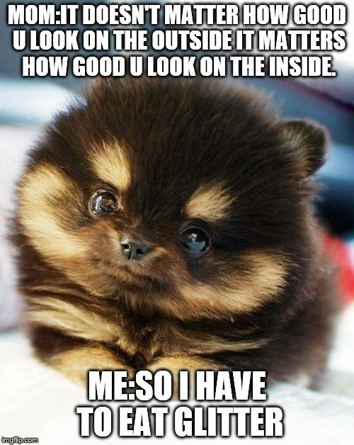 pomeranian | MOM:IT DOESN'T MATTER HOW GOOD U LOOK ON THE OUTSIDE IT MATTERS HOW GOOD U LOOK ON THE INSIDE. ME:SO I HAVE TO EAT GLITTER | image tagged in pomeranian | made w/ Imgflip meme maker
