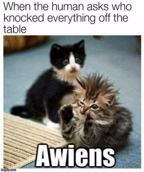 Awiens | . | image tagged in funny,lolcats | made w/ Imgflip meme maker