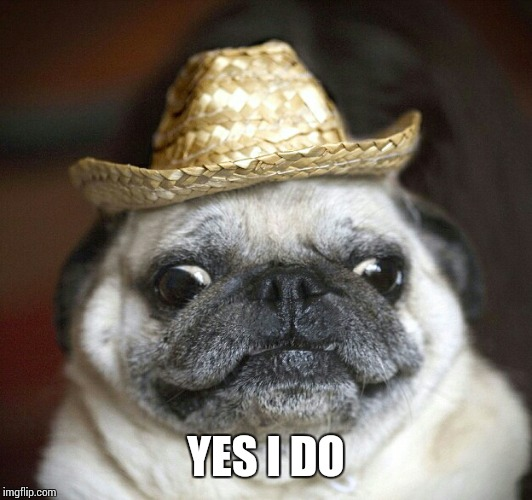 pug life | YES I DO | image tagged in pug life | made w/ Imgflip meme maker