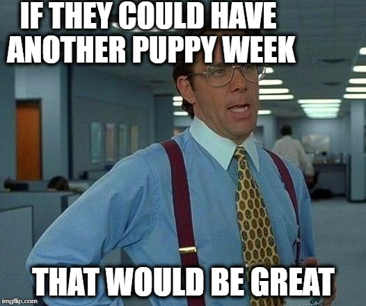 That Would Be Great Meme | IF THEY COULD HAVE ANOTHER PUPPY WEEK THAT WOULD BE GREAT | image tagged in memes,that would be great | made w/ Imgflip meme maker