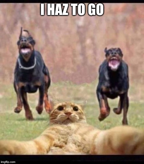 I HAZ TO GO | made w/ Imgflip meme maker