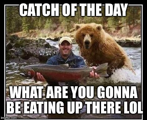 CATCH OF THE DAY WHAT ARE YOU GONNA BE EATING UP THERE LOL | made w/ Imgflip meme maker