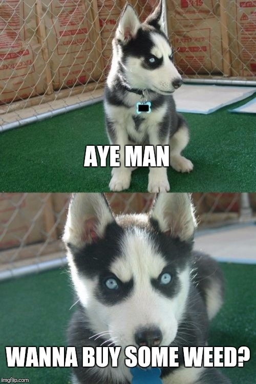 Insanity Puppy Meme | AYE MAN WANNA BUY SOME WEED? | image tagged in memes,insanity puppy | made w/ Imgflip meme maker