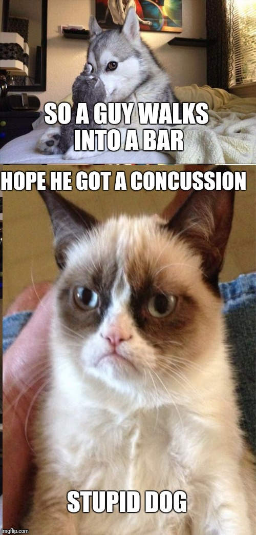 Bad pun dog V.S. Grumpy Cat! Who wins? | SO A GUY WALKS INTO A BAR HOPE HE GOT A CONCUSSION STUPID DOG | image tagged in grumpy cat,bad pun dog | made w/ Imgflip meme maker