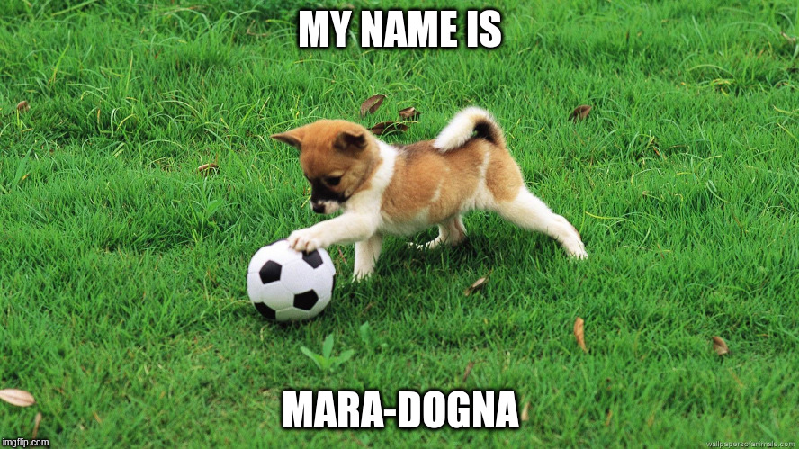 MY NAME IS MARA-DOGNA | made w/ Imgflip meme maker