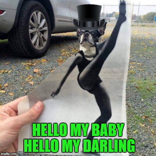 Michigan J Dog | HELLO MY BABY HELLO MY DARLING | image tagged in michigan j dog,memes,looney tunes,funny,dog,animals | made w/ Imgflip meme maker