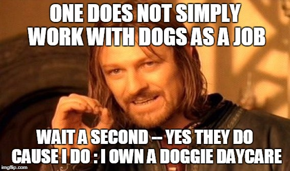 One Does Not Simply Meme | ONE DOES NOT SIMPLY WORK WITH DOGS AS A JOB WAIT A SECOND -- YES THEY DO CAUSE I DO : I OWN A DOGGIE DAYCARE | image tagged in memes,one does not simply | made w/ Imgflip meme maker