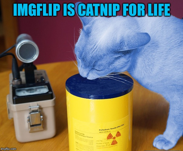 RayCat eating | IMGFLIP IS CATNIP FOR LIFE | image tagged in raycat eating | made w/ Imgflip meme maker