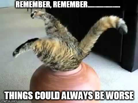stuck cat | REMEMBER, REMEMBER...................... THINGS COULD ALWAYS BE WORSE | image tagged in stuck cat | made w/ Imgflip meme maker