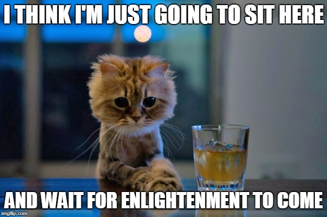 this may be me | I THINK I'M JUST GOING TO SIT HERE AND WAIT FOR ENLIGHTENMENT TO COME | image tagged in contemplative cat,memes,cat,cats,enlightenment,drinking | made w/ Imgflip meme maker