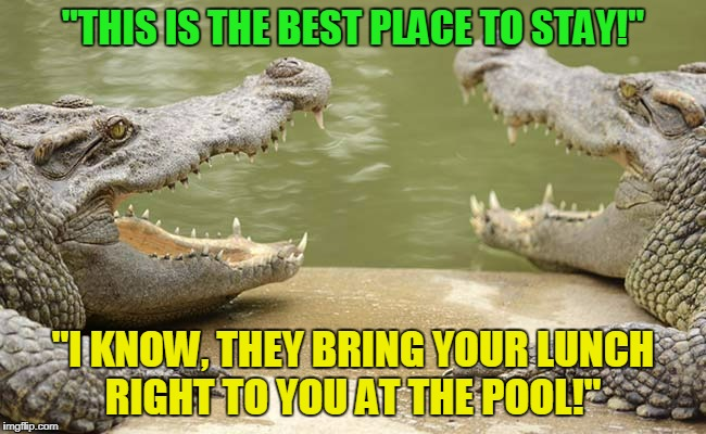 """THIS IS THE BEST PLACE TO STAY!"" ""I KNOW, THEY BRING YOUR LUNCH RIGHT TO YOU AT THE POOL!"" 