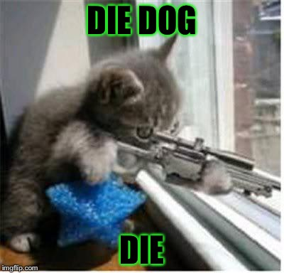 cats with guns | DIE DOG DIE | image tagged in cats with guns | made w/ Imgflip meme maker