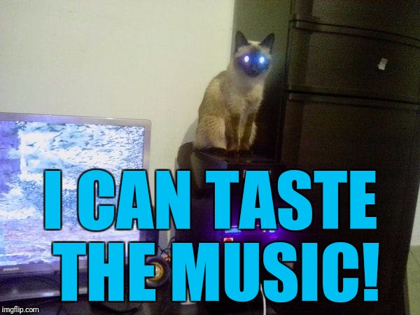 Internet Cat | I CAN TASTE THE MUSIC! | image tagged in internet cat | made w/ Imgflip meme maker