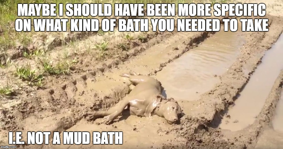 Dog Mud Bath | MAYBE I SHOULD HAVE BEEN MORE SPECIFIC ON WHAT KIND OF BATH YOU NEEDED TO TAKE I.E. NOT A MUD BATH | image tagged in memes,dog,mud bath | made w/ Imgflip meme maker