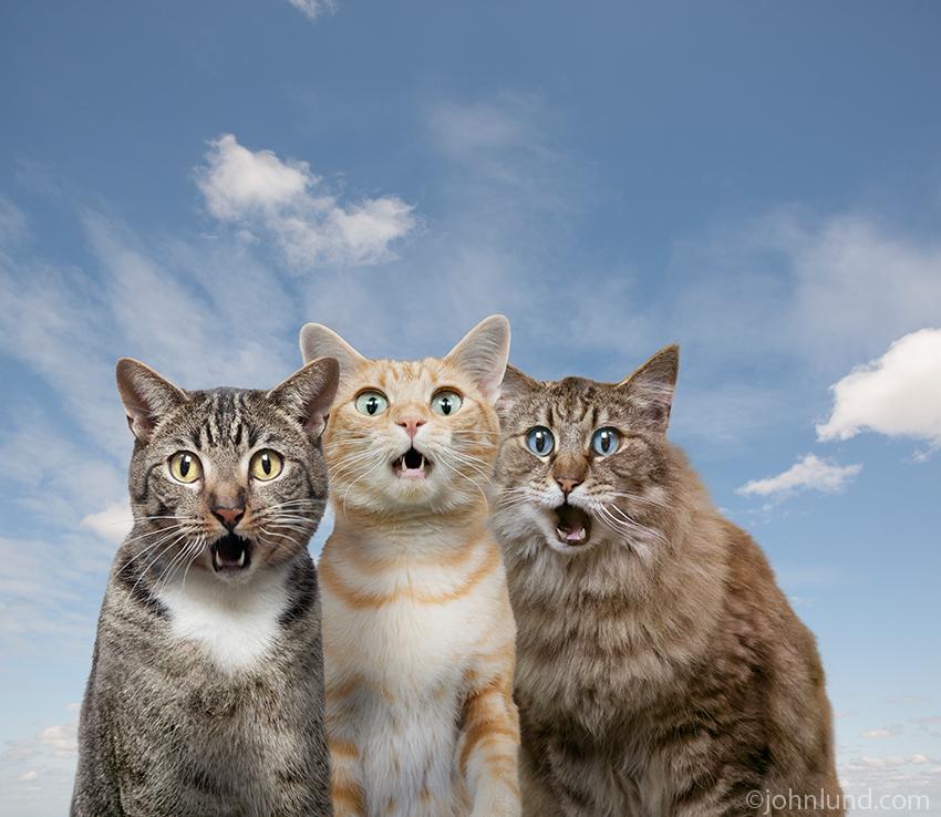 Картинки дружных котов с надписями, машина картинки