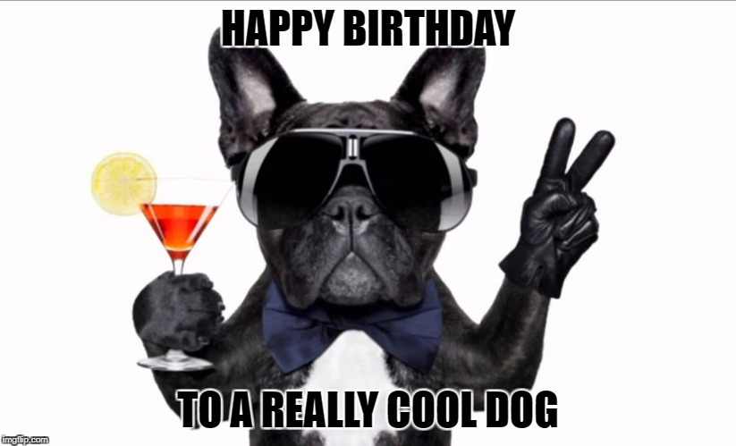 HAPPY BIRTHDAY TO A REALLY COOL DOG | image tagged in cool dog birthday | made w/ Imgflip meme maker