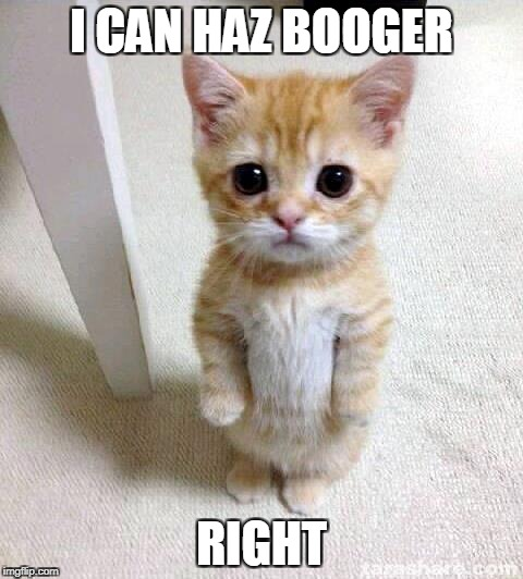 Cute Cat Meme | I CAN HAZ BOOGER RIGHT | image tagged in memes,cute cat | made w/ Imgflip meme maker