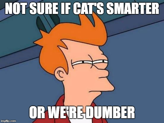 Cats entertaining us to keep us dumb | NOT SURE IF CAT'S SMARTER OR WE'RE DUMBER | image tagged in memes,futurama fry | made w/ Imgflip meme maker
