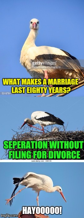 Patience, understanding, compromise?, meh, sounds like work. | WHAT MAKES A MARRIAGE LAST EIGHTY YEARS? SEPERATION WITHOUT FILING FOR DIVORCE | image tagged in bad pun stork,sewmyeyesshut,memes,funny | made w/ Imgflip meme maker