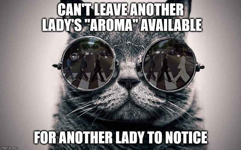 "Beatles cat | CAN'T LEAVE ANOTHER LADY'S ""AROMA"" AVAILABLE FOR ANOTHER LADY TO NOTICE 