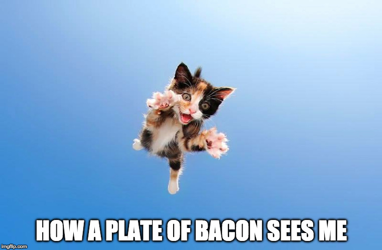 Pretty much. | HOW A PLATE OF BACON SEES ME | image tagged in cats,iwanttobebaconcom,iwanttobebacon,bacon,bacon fun | made w/ Imgflip meme maker