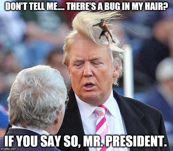 Trump Hair Surfer Meme Generator Imgflip