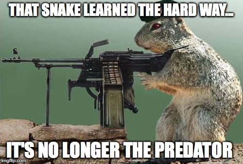 THAT SNAKE LEARNED THE HARD WAY... IT'S NO LONGER THE PREDATOR | made w/ Imgflip meme maker