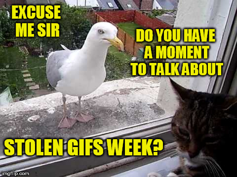EXCUSE ME SIR STOLEN GIFS WEEK? DO YOU HAVE A MOMENT TO TALK ABOUT | made w/ Imgflip meme maker
