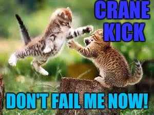 THE CAT-RA-TEE KID :D | CRANE KICK DON'T FAIL ME NOW! | image tagged in free hugs,funny,memes,cats,animals,humor | made w/ Imgflip meme maker