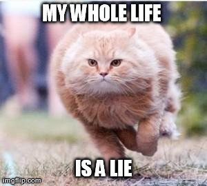 MY WHOLE LIFE  IS A LIE | image tagged in funny,memes,cats | made w/ Imgflip meme maker
