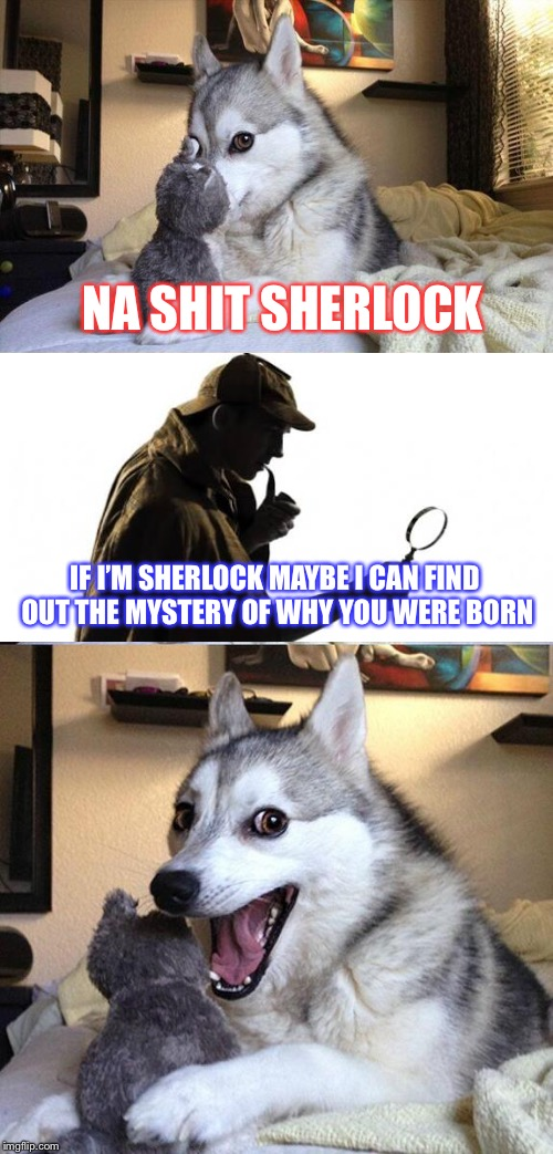 Bad Pun Dog Meme |  NA SHIT SHERLOCK; IF I'M SHERLOCK MAYBE I CAN FIND OUT THE MYSTERY OF WHY YOU WERE BORN | image tagged in memes,bad pun dog | made w/ Imgflip meme maker