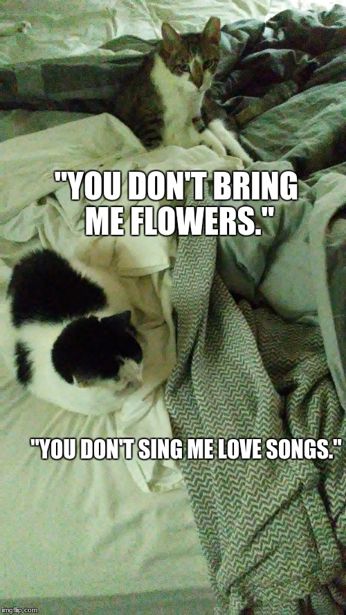 """Love on the Rocks"" for Rocky, Cat champion of the universe, and Adrian 