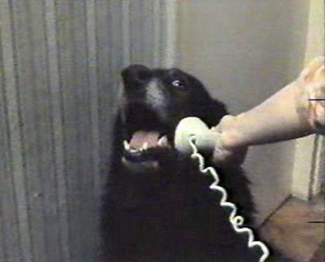Phone Dog Meme Template