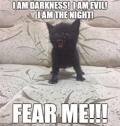 Evil Kitten | I AM DARKNESS!  I AM EVIL!       I AM THE NIGHT! FEAR ME!!! | image tagged in cats,funny cats,evil,darkness,epic darkness,cute kittens | made w/ Imgflip meme maker