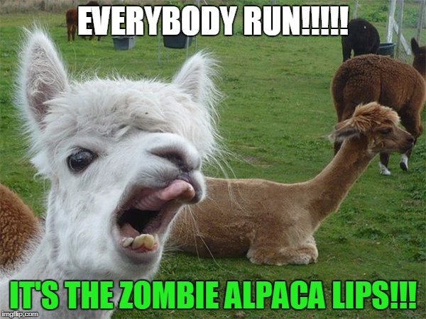 EVERYBODY RUN!!!!! IT'S THE ZOMBIE ALPACA LIPS!!! | image tagged in alpaca lips | made w/ Imgflip meme maker