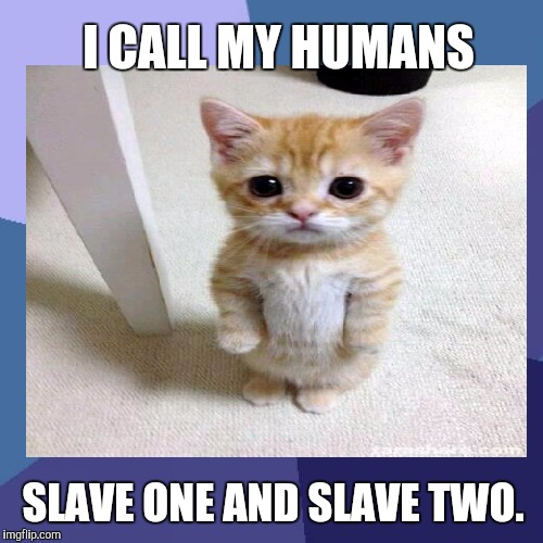 AT LEAST KITTY IS HONEST. :D | I CALL MY HUMANS SLAVE ONE AND SLAVE TWO. | image tagged in funny,memes,animals,cats,pets,humor | made w/ Imgflip meme maker
