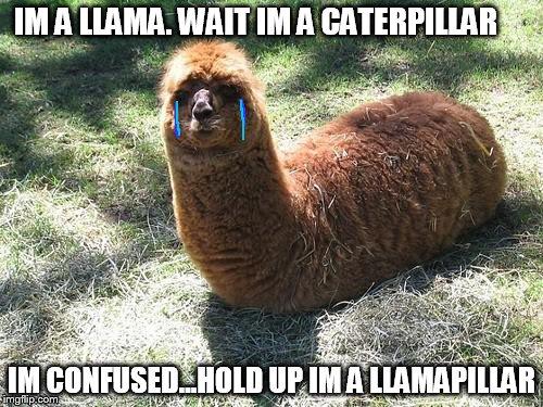 Image result for Llama Memes