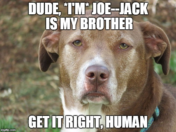 DUDE, *I'M* JOE--JACK IS MY BROTHER GET IT RIGHT, HUMAN | image tagged in unamused dog | made w/ Imgflip meme maker