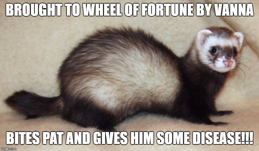 Unknown the Chaos Ferret | BROUGHT TO WHEEL OF FORTUNE BY VANNA BITES PAT AND GIVES HIM SOME DISEASE!!! | image tagged in unknown the chaos ferret | made w/ Imgflip meme maker