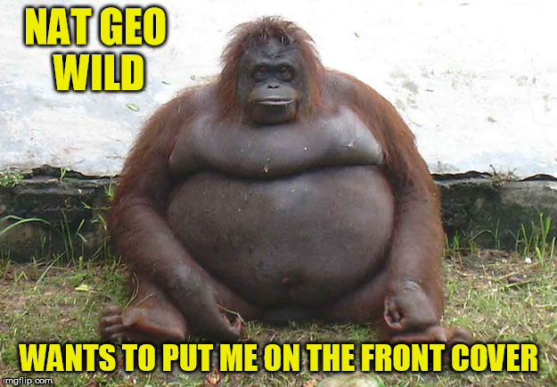 NAT GEO WILD WANTS TO PUT ME ON THE FRONT COVER | made w/ Imgflip meme maker