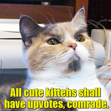 All cute kittehs shall have upvotes, comrade. | made w/ Imgflip meme maker
