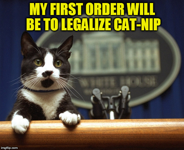 MY FIRST ORDER WILL BE TO LEGALIZE CAT-NIP | made w/ Imgflip meme maker