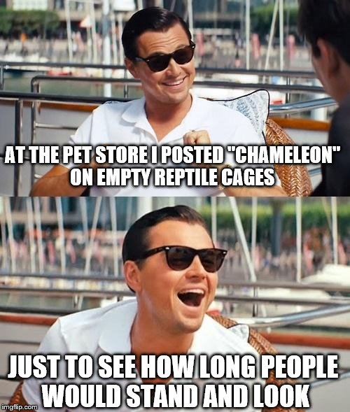 "Leonardo Dicaprio Wolf Of Wall Street | AT THE PET STORE I POSTED ""CHAMELEON"" ON EMPTY REPTILE CAGES JUST TO SEE HOW LONG PEOPLE WOULD STAND AND LOOK 