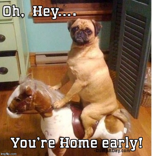 A fake horse, huh? | . | image tagged in memes,dog,fake horse,oh hey,you're home early | made w/ Imgflip meme maker