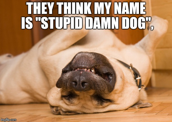 "Sleeping dog | THEY THINK MY NAME IS ""STUPID DAMN DOG"", 
