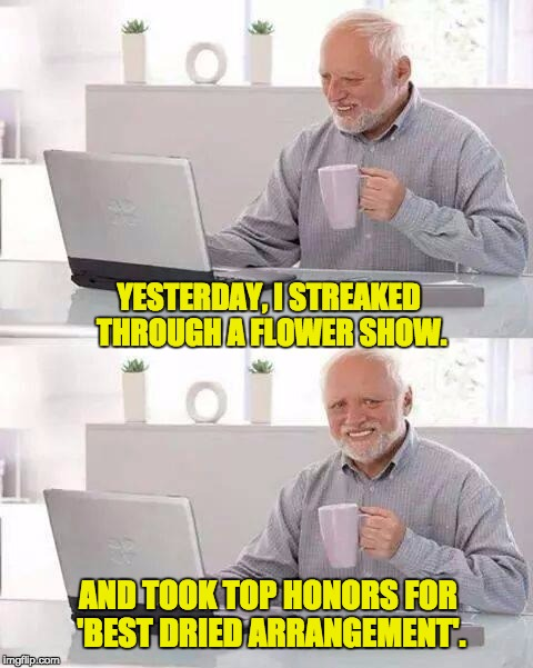 And it was the 'Berries and Twigs' Category. | YESTERDAY, I STREAKED THROUGH A FLOWER SHOW. AND TOOK TOP HONORS FOR 'BEST DRIED ARRANGEMENT'. | image tagged in memes,hide the pain harold | made w/ Imgflip meme maker