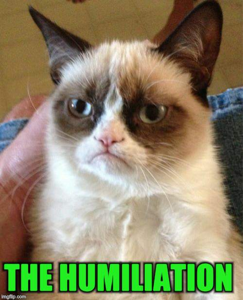 Grumpy Cat Meme | THE HUMILIATION | image tagged in memes,grumpy cat | made w/ Imgflip meme maker